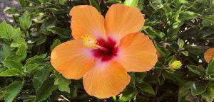 Schönheitsträume Bild Blume