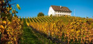 Weingut auf Hügel Klosterkellerei